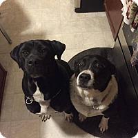 Adopt A Pet :: LEAH & JAKE-courtesy - Morgantown, IN