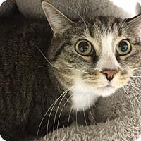 Adopt A Pet :: Pearl - Medina, OH