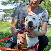 Adopt A Pet :: Fancy - Delaware, OH