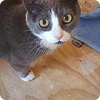 Adopt A Pet :: Nina - Plainville, MA