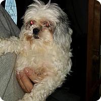 Adopt A Pet :: Linny - Inver Grove, MN