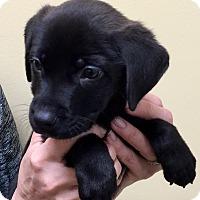 Adopt A Pet :: I'M ADOPTED Mardi Esparza - Oswego, IL