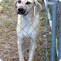 Adopt A Pet :: Tucker - Waller, TX