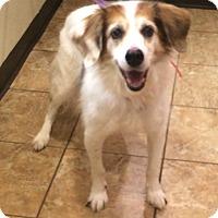Adopt A Pet :: Bogart - Oak Ridge, NJ