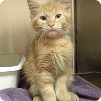 Adopt A Pet :: TINK-available 12/07 - Marietta, GA