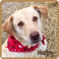 Adopt A Pet :: Marley - Jasper, IN