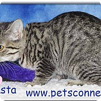 Adopt A Pet :: Jocasta - South Bend, IN