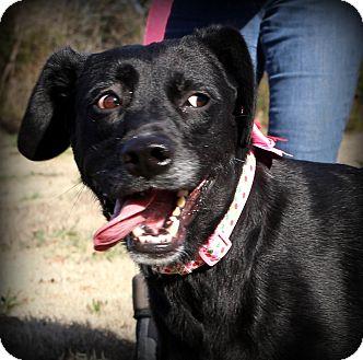 Labrador Retriever Mix Dog for adoption in Glastonbury, Connecticut - Reese