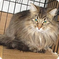 Adopt A Pet :: MissLeah - detroit, MI