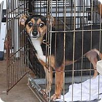 Adopt A Pet :: Precious - Ormond Beach, FL