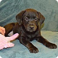 Adopt A Pet :: Anna - Marietta, GA