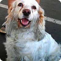 Adopt A Pet :: Lilith - Scottsdale, AZ