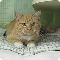 Adopt A Pet :: Mistletoe - Chicago, IL