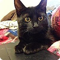 Adopt A Pet :: Freya - Brooklyn, NY