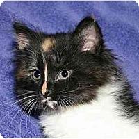 Adopt A Pet :: Bella - Montgomery, IL