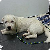 Adopt A Pet :: Dozer - Brattleboro, VT