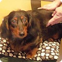 Adopt A Pet :: SUSIE Q - Portland, OR