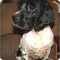 Adopt A Pet :: Thor - Sugarland, TX