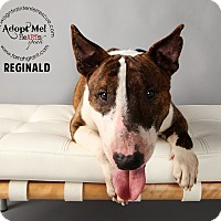 Adopt A Pet :: Reginald - Omaha, NE