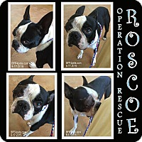 Adopt A Pet :: Roscoe - La Quinta, CA