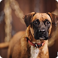 Adopt A Pet :: Tazzy - Portland, OR