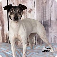 Adopt A Pet :: Trixie In Houston - Houston, TX