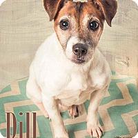 Adopt A Pet :: Dill - Terre Haute, IN
