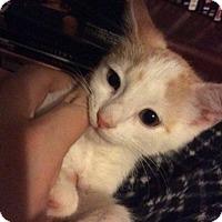 Adopt A Pet :: Miles - Putnam, CT