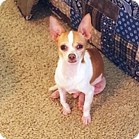 Adopt A Pet :: Tyger - Denver, CO