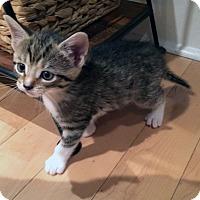 Adopt A Pet :: Vida - Mississauga, Ontario, ON