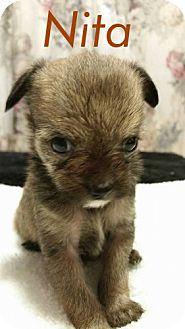Cairn Terrier/Terrier (Unknown Type, Medium) Mix Puppy for adoption in Shreveport, Louisiana - Nita