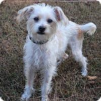 Adopt A Pet :: Marty - New City, NY
