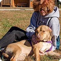 Adopt A Pet :: Lola - Midlothian, VA