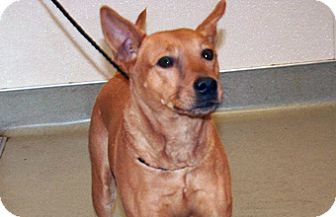 Shepherd (Unknown Type) Mix Dog for adoption in Wildomar, California - Lucille