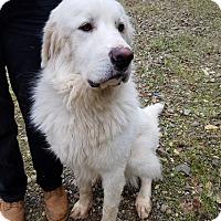 Adopt A Pet :: Kyro - Red Bluff, CA