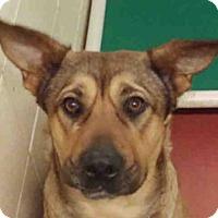 Adopt A Pet :: NAKA - Missoula, MT
