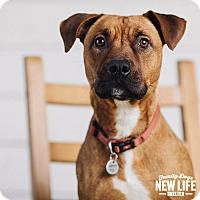 Adopt A Pet :: Kellogg - Portland, OR