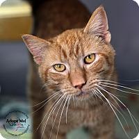 Adopt A Pet :: Tigger - Lyons, NY
