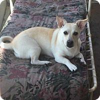 Adopt A Pet :: Peach* - Tampa, FL