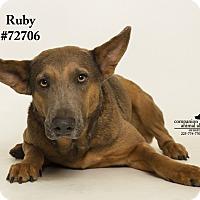 Adopt A Pet :: Ruby - Baton Rouge, LA