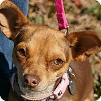 Adopt A Pet :: Chloe - Conway, AR