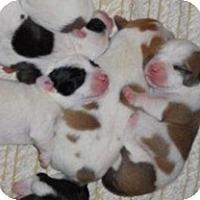 Adopt A Pet :: Grace, Faith, Hope, Joy - Wilmette, IL