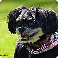 Adopt A Pet :: Murphy - PENDING, in Maine - kennebunkport, ME