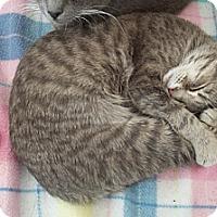 Adopt A Pet :: Mia Grace - Acme, PA