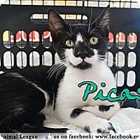 Adopt A Pet :: Picasso - Bradenton, FL