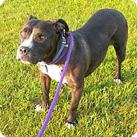 Adopt A Pet :: Dallie - Pending adoption - Lancaster, PA
