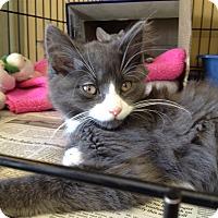 Adopt A Pet :: Bumper - Island Park, NY