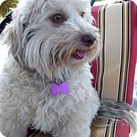Adopt A Pet :: Darla - Salem, OR