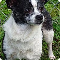 Adopt A Pet :: Charlotte - S. Pasedena, FL