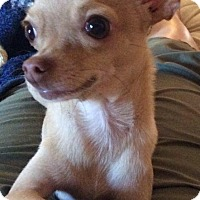 Adopt A Pet :: Tiny Tim - Surrey, BC